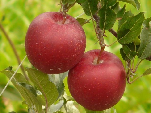 apple-666_640.jpg
