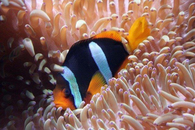 aquarium-1706_640.jpg