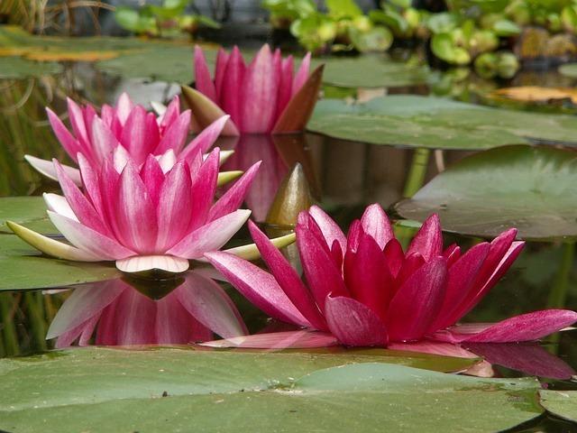 aquatic-plant-182635_640.jpg