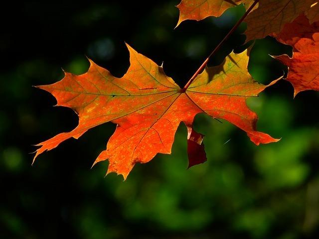 autumn-196566_640.jpg