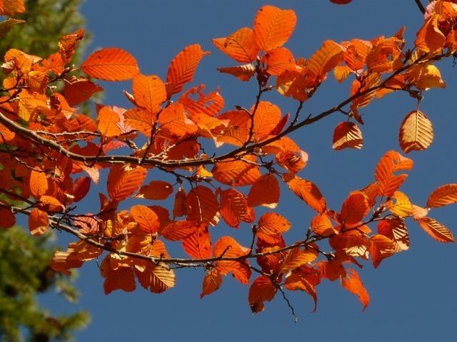 autumn-1_640.jpg