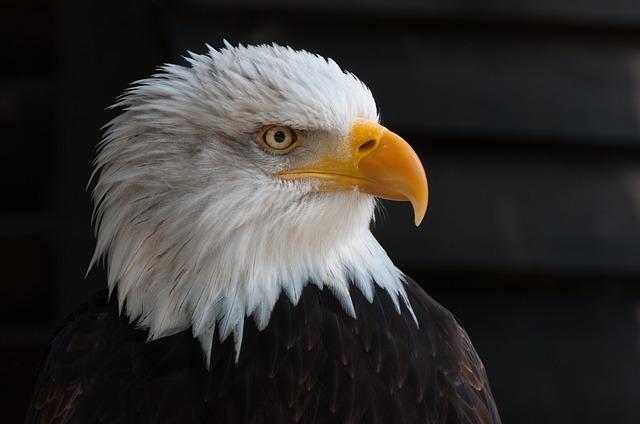 bald-eagles-341898_640.jpg