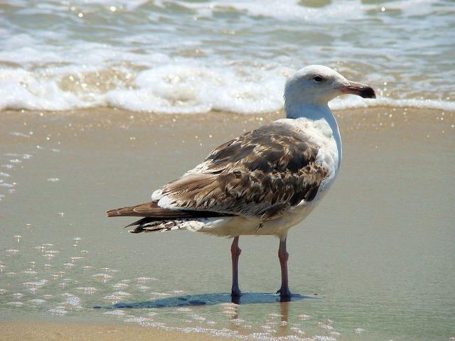 bird-2447_640.jpg