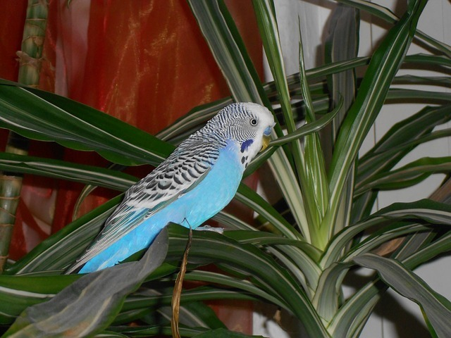 bird-55750_640.jpg