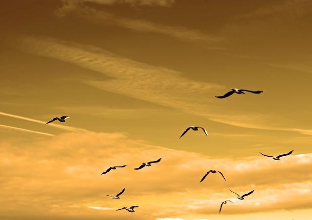 birds-84665_640.jpg