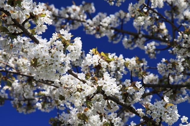 bloom-2167_640.jpg