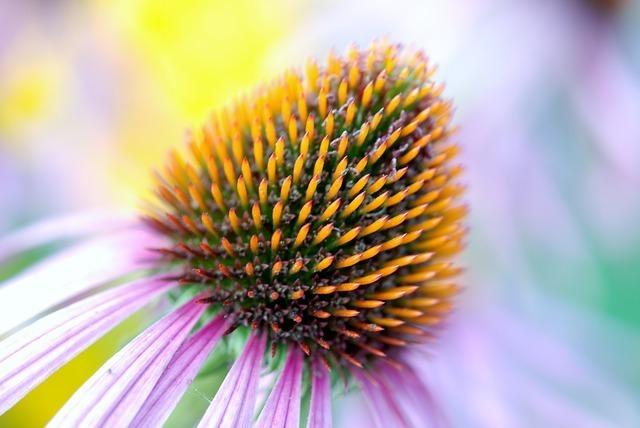 bloom-22786_640.jpg