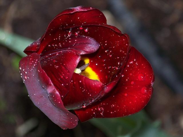 bloom-46655_640.jpg