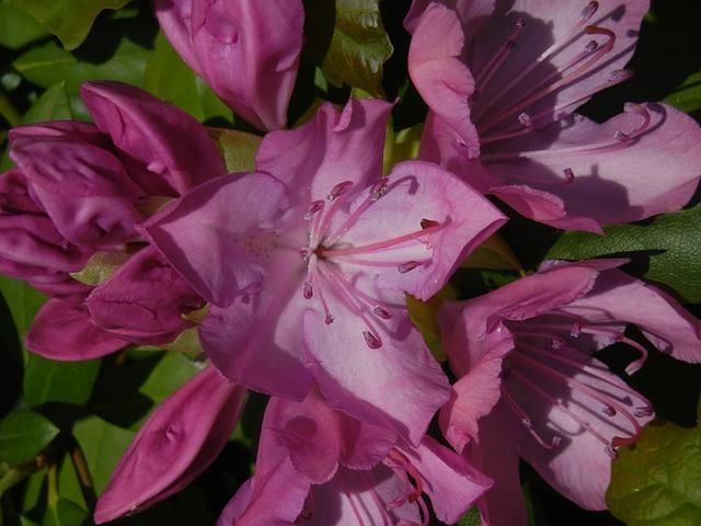 blossom-49077_640.jpg