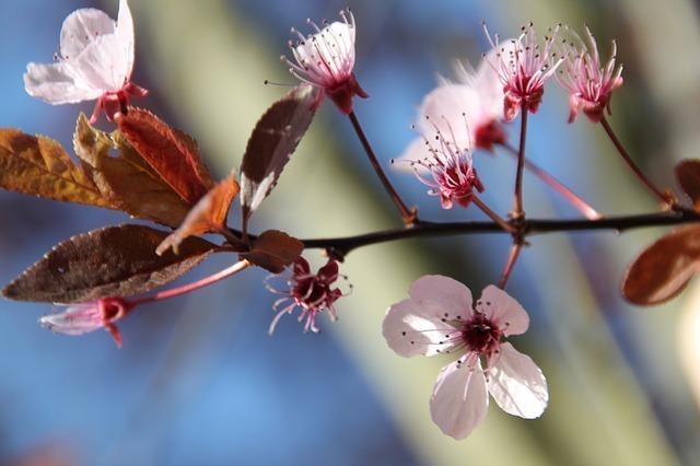 blossom-56605_640.jpg