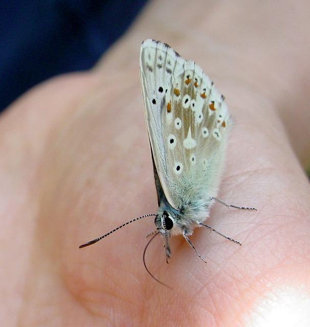 butterfly-1056_640.jpg
