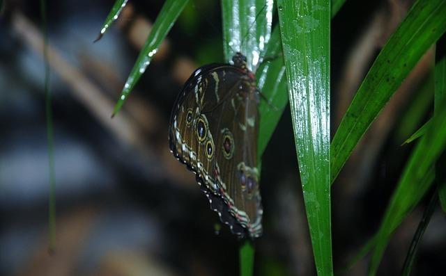 butterfly-22397_640.jpg