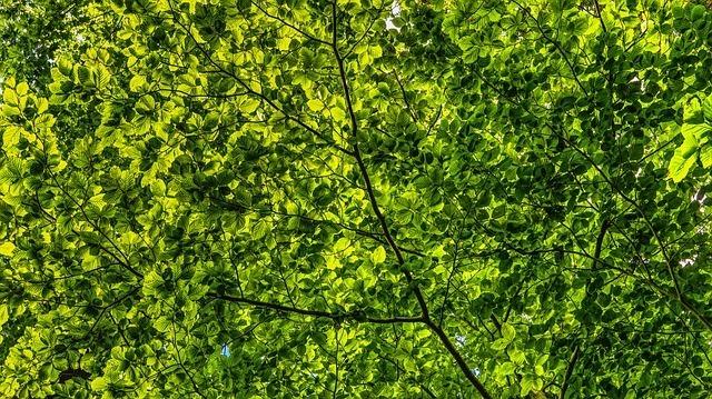 canopy-2552954_640.jpg