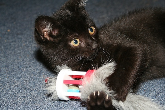 cat-22748_640.jpg