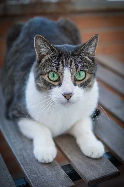 cat-2603300_640.jpg