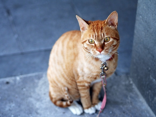cat-360807_640.jpg