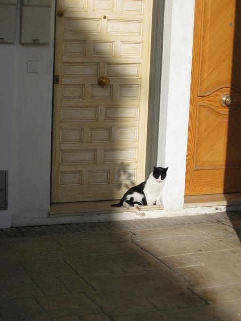 cat-56106_640.jpg