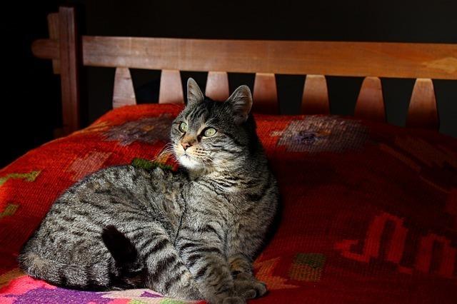 cat-56874_640.jpg