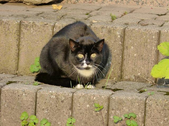 cat-58698_640.jpg