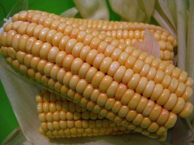 corn-on-the-cob-57287_640.jpg