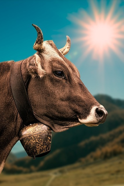 cow-2193018_640.jpg