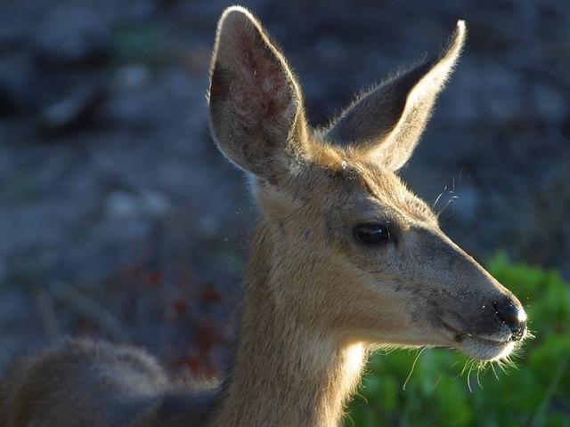 deer-3248_640.jpg