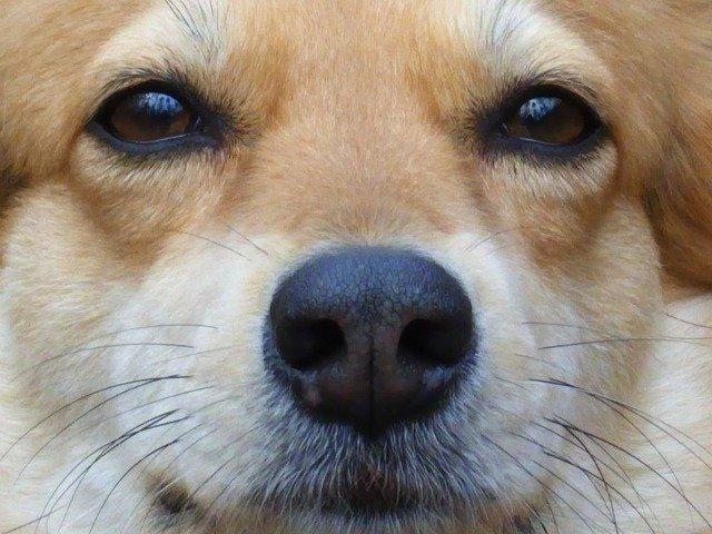 dog-54626_640.jpg
