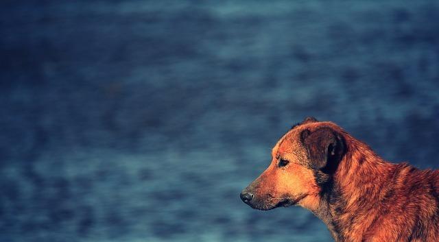 dog-56808_640.jpg
