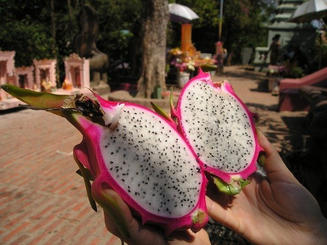dragon-fruit-441_640.jpg