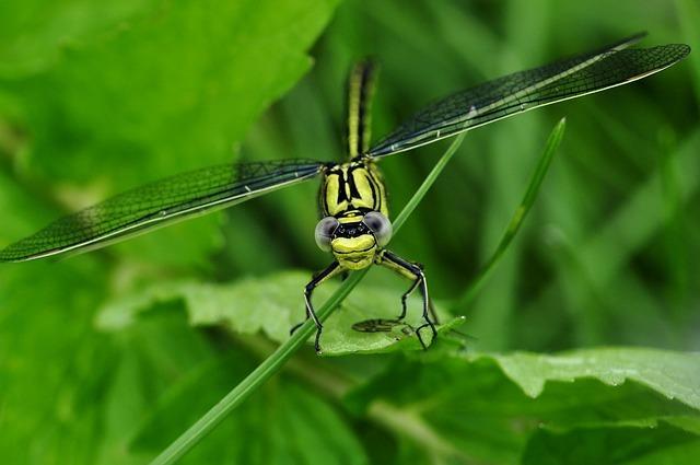 dragonfly-122794_640.jpg
