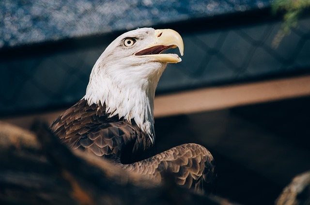 eagle-1246681_640.jpg