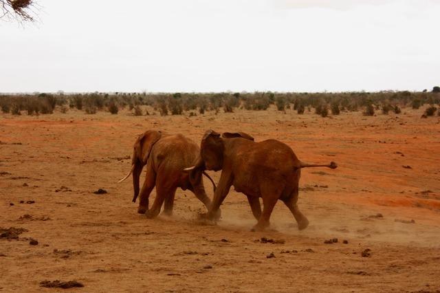elephant-2833_640.jpg