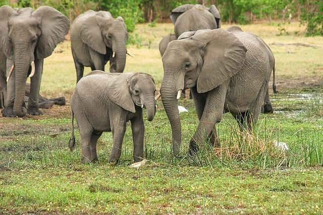 elephant-2923917_640.jpg