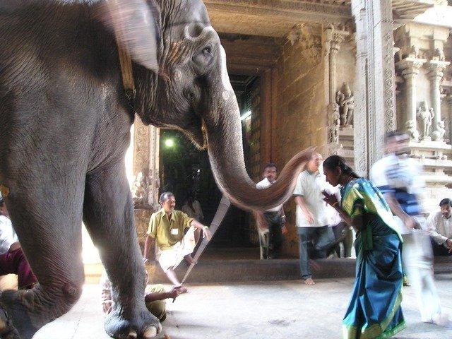 elephant-375_640.jpg