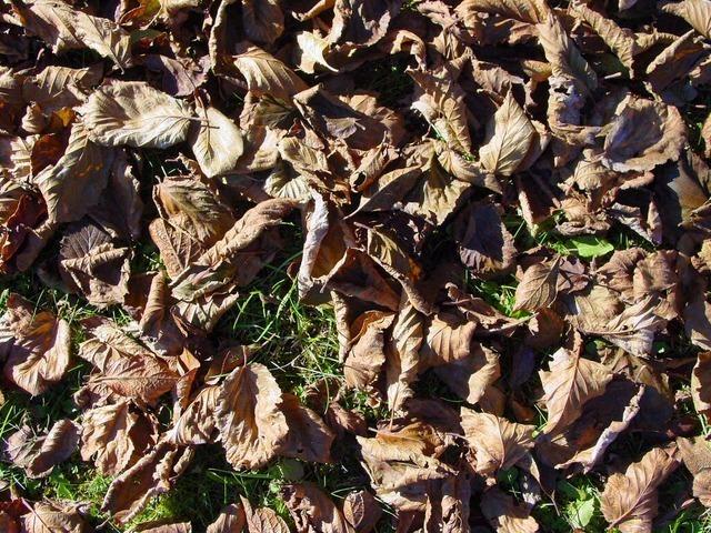 fall-foliage-1041_640.jpg