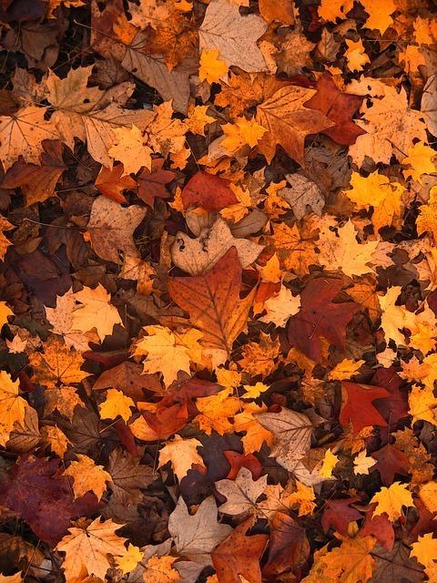 fall-foliage-111315_640.jpg