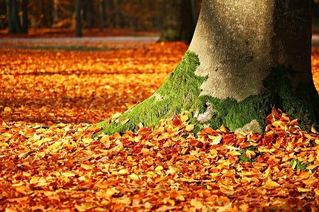 fall-foliage-1913485_640.jpg