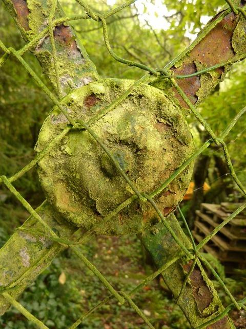 fence-57883_640.jpg