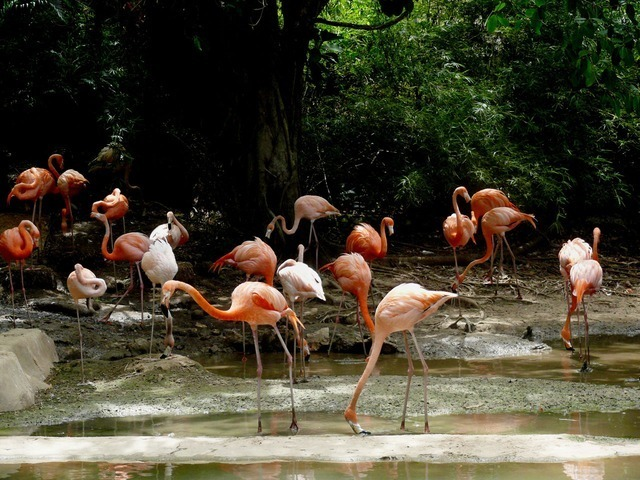 flamingo-1889_640.jpg