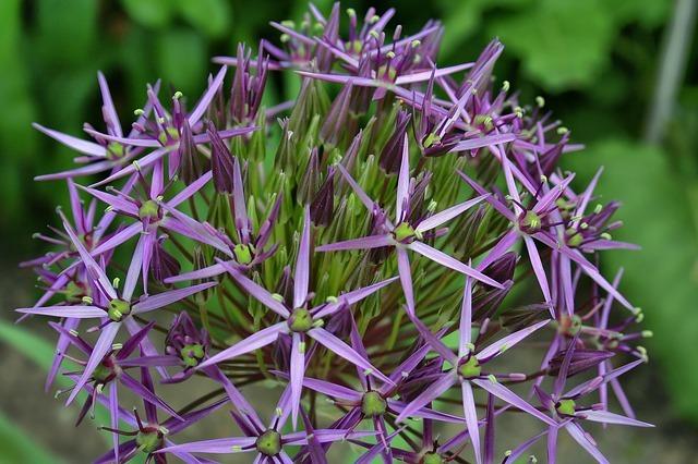 flower-139237_640.jpg