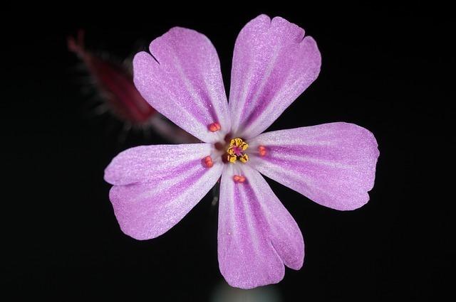 flower-171644_640.jpg