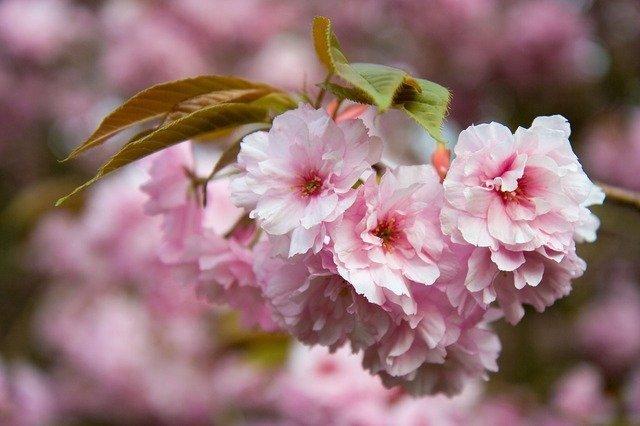 flower-1814_640.jpg