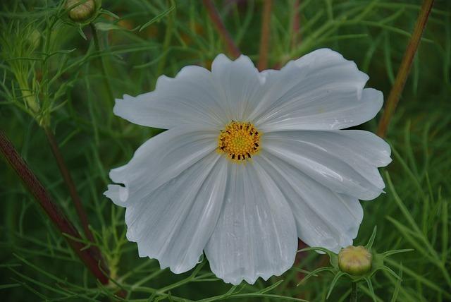 flower-22705_640.jpg