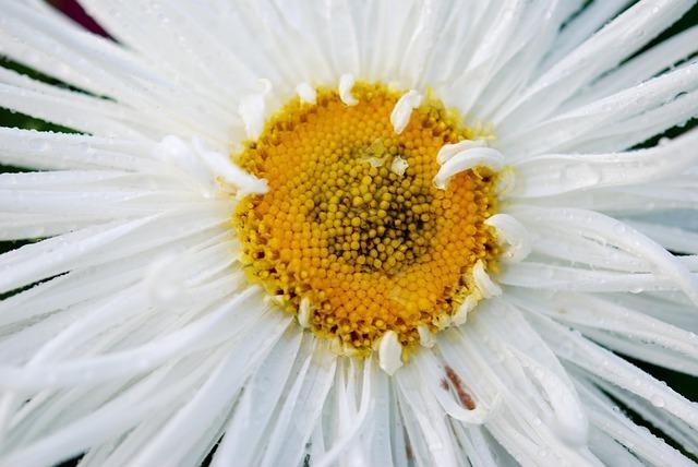 flower-22787_640.jpg