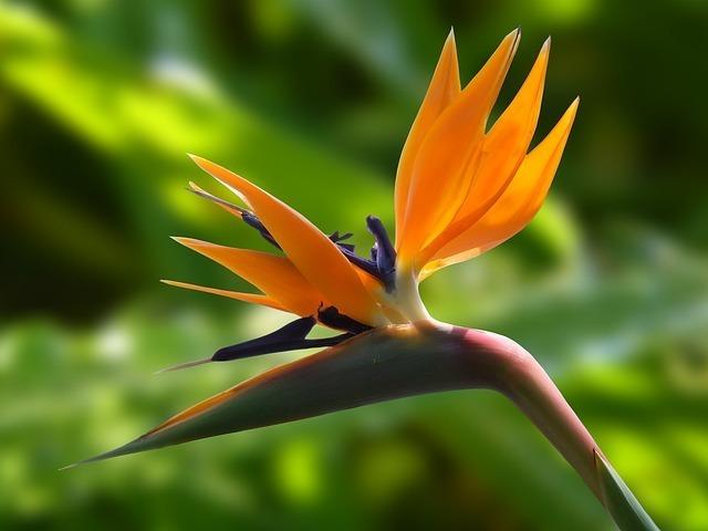flower-236008_640.jpg
