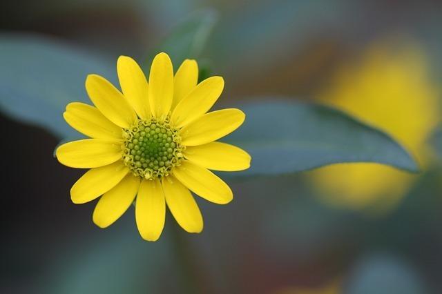 flower-247409_640.jpg