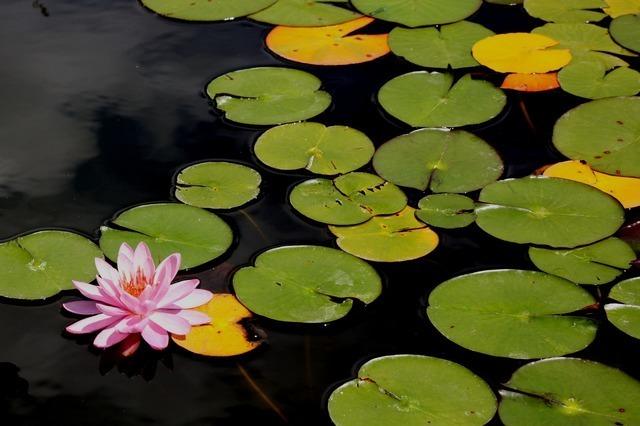 flower-2649_640.jpg