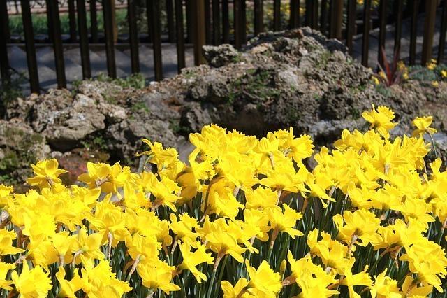 flower-49080_640.jpg