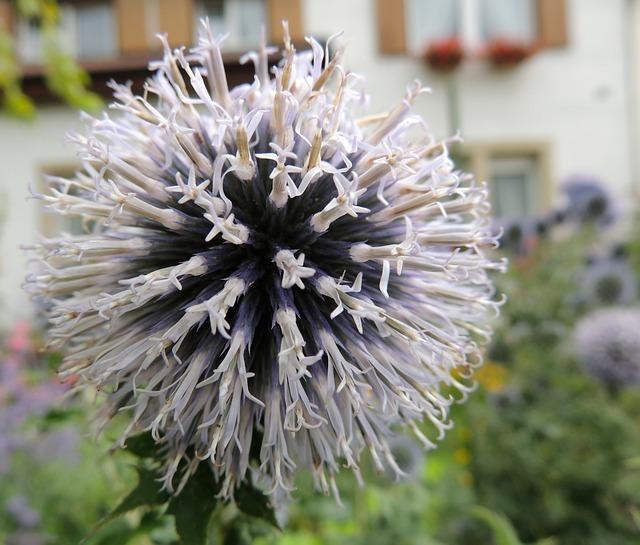 flower-56388_640.jpg