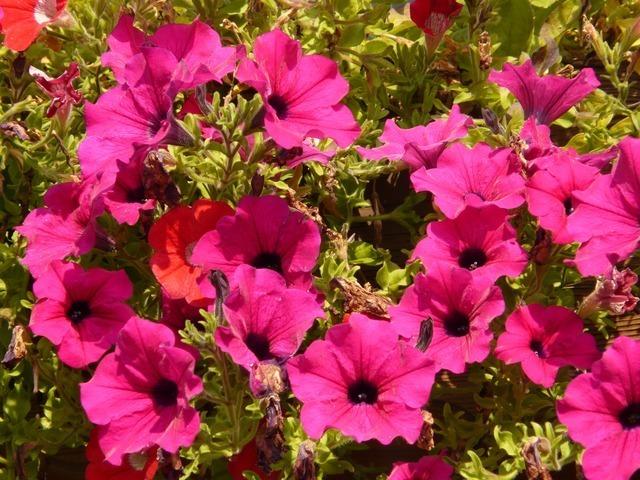 flower-577_640.jpg